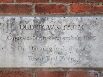 Old Town Farm Cognatum Estates